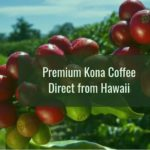 kona coffee beans, kona coffee Hawaii, where to buy kona coffee, kona blend coffee, pure kona coffee, hawaiian coffee brands, kona coffee company, best Kona coffee, hawaiian coffee beans, kona coffee where to buy, 100 percent kona coffee, kona coffee for sale, kona coffee online, real kona coffee, peaberry kona coffee, best hawaiian coffee, kona coffee farm, coffee gift set, burr coffee grinder, low acid coffee, k cup coffee, coffee beans online, coffee bean grinder, pumpkin spice coffee, espresso coffee machine, espresso coffee makerv, braun coffee maker, senseo coffee pods, best coffee in the world, coffee bean and tea leaf, best coffee maker, caffeine in coffee, how to make coffee, types of coffee, espresso coffee, mocha java coffee, fine ground coffee, coffee beans price, coffee bean shop, free trade coffee, kona coffee plants for sale, best coffee beans to buy, high quality coffee, sumatra coffee beans, hawaii coffee roasters, best coffee online, how to roast coffee beans, wholesale coffee suppliers, costa rica coffee beans. coffee syrup flavors, best green coffee beans, coffee farm tours kona Hawaii, coffee bean franchise, kona coffee caffeine content, kona cafe coffee, italian espresso coffee, coffee manufacturers, best gourmet coffee, history of coffee, coffee products, raw coffee beans for sale, organic flavored coffee, best coffee roasters, gourmet coffee online, mail order coffee, kona coffee color, blue mountain coffee beans, fresh ground coffee, high quality coffee, best gourmet coffee, the best coffee beans,hawaiian coffee, cona coffee, peaberry coffee, kona beans, kona Hawaii, coffee gifts, coffee syrup, coffee grinders, coffee pot, coffee makers, coffee pods, coffee, coffee hous, coffee machine, coffee bean, coffee recipe, coffee cup, best coffee, cappuccino coffee, coffee prince, starbucks coffee, coffee pictures, espresso, mocha, mocha coffee, coffee market